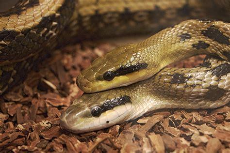 Wildlife, Fauna, Background, Snake