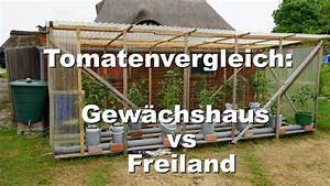 Tomaten Im Hochbeet : rundgang durch den garten tomaten im freiland vs gew chshaus youtube ~ Whattoseeinmadrid.com Haus und Dekorationen
