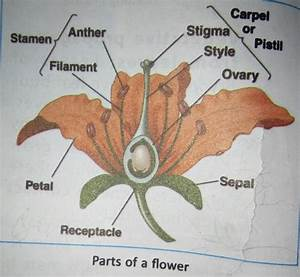 Diagram The Parts Of A Flower And Label Their Functions