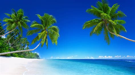wallpaper tropical beach   wallpaper  paradise