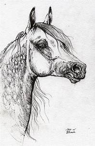 Grafik Polish Arabian Horse Ink Drawing 1 Drawing by Angel ...