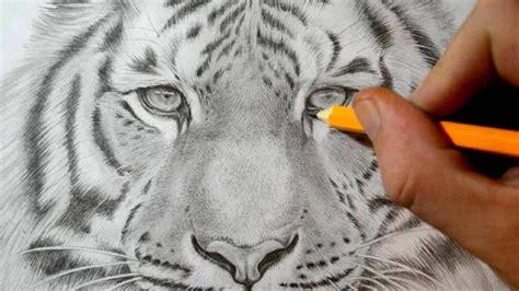 love drawings  tigers realistic pencil drawings