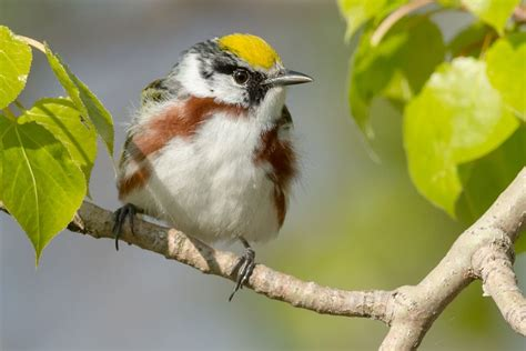identify birds by their songs using this clever trick