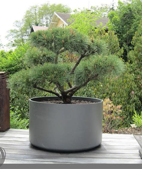 Outdoor Planters by Large Outdoor Planter Pot For Bonsai Tree Or