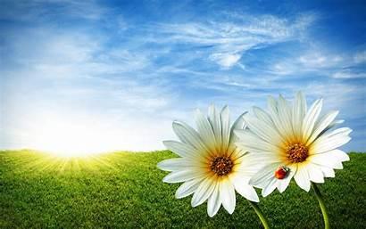 Spring Wallpapers Desktop Background Springtime Widescreen Nature