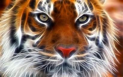 Tiger 3d Livewallpaperhd Resolution
