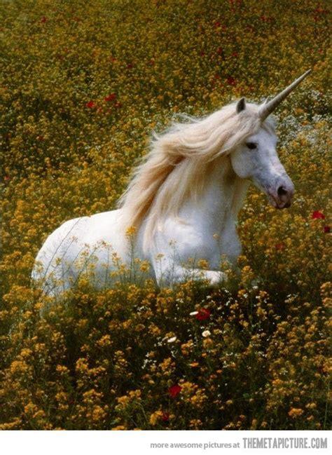 unicorns  real    magical real