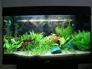 Aquarium Gestaltung Bilder : aquarium pflanzenaquarien marlit 39 s blog ~ Lizthompson.info Haus und Dekorationen