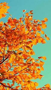 Fall Tree Art iPhone 5s Wallpaper Download