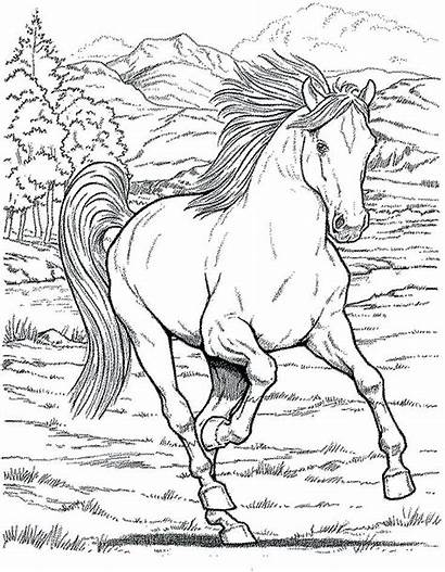 Coloring Horse Pages Detailed Printable Getcolorings