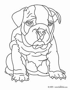 Bulldog coloring pages - Hellokids.com