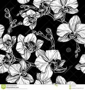 Black And White Seamless Pattern With Hand Drawing Orchid ...