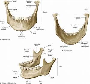 Oral Cavity  U0026 Pharynx