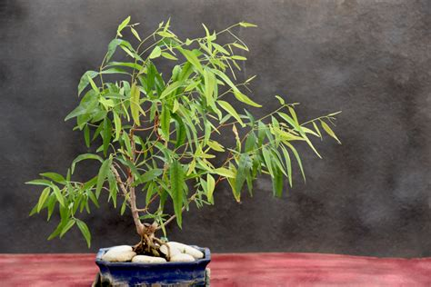 Balkonpflanzen Gegen Mücken balkonpflanzen gegen m 252 cken 187 die 10 wirksamsten pflanzen