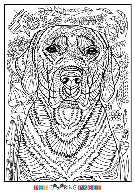 printable labrador retriever coloring page    simple  detailed
