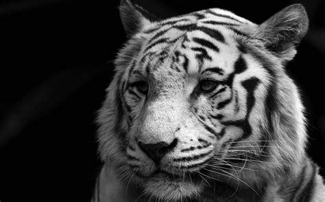 Black And White Animal Wallpaper - desktop hd wallpaper widescreen hd free 3d