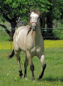 Pin by Stephanie Meza on Horses:) | Pinterest