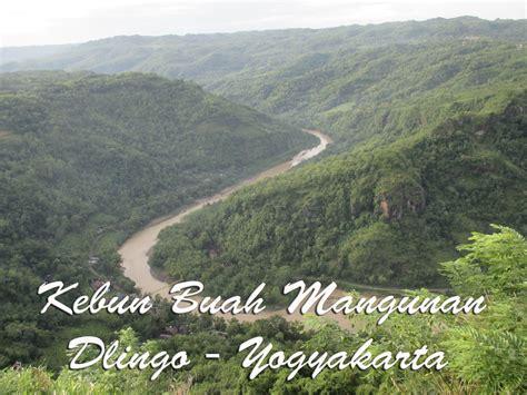 jalan jalan  kebun buah mangunan hutan pinus  puncak
