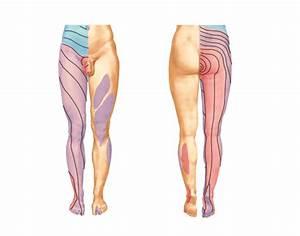 Lower Limb Dermatomes