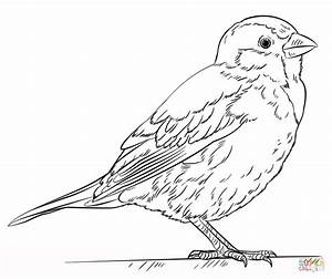 House Sparrow coloring page | Free Printable Coloring Pages