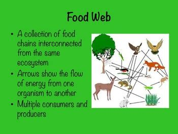 food chains  food webs   heart   child tpt