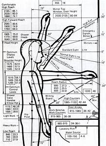 1000  Images About Anthropometry
