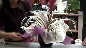 Come confezionare le piante in vaso YouTube