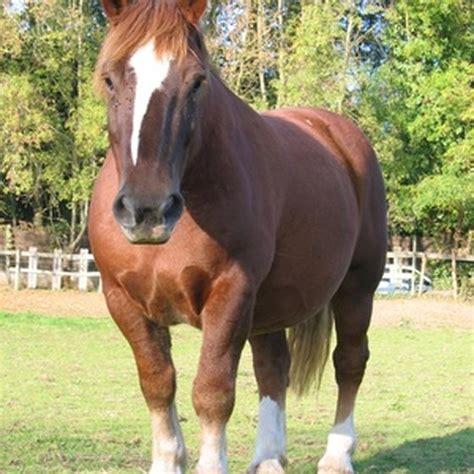 kentucky riding horseback vacations horses usa fotolia today attraction popular