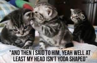 cat jokes for cat jokes dump a day