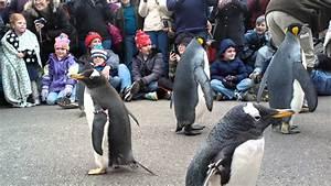 Penguin Parade @ Saint Louis Zoo!! (01.20.13)
