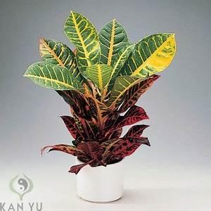 Zimmerpflanzen Feng Shui : 12 besten plants zimmerpflanzen feng shui energie bilder auf pinterest feng shui ~ Indierocktalk.com Haus und Dekorationen