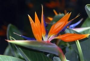 Bilder Blumen Kostenlos Downloaden : desktop hintergrundbilder wallpaper kostenlos gratis blumen pflanzen natur landschaften ~ Frokenaadalensverden.com Haus und Dekorationen