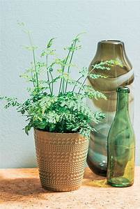 Cache Pot Doré : cache pot dor pour illuminer vos plantes vertes truffaut d coration pinterest plantes ~ Teatrodelosmanantiales.com Idées de Décoration