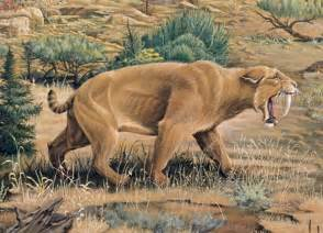 saber tooth cat follow the piper sabertooth cats
