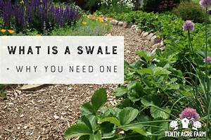 What is a Swale and Why You Need One Tenth Acre Farm