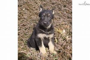 German Shepherd puppy for sale near Lancaster ...