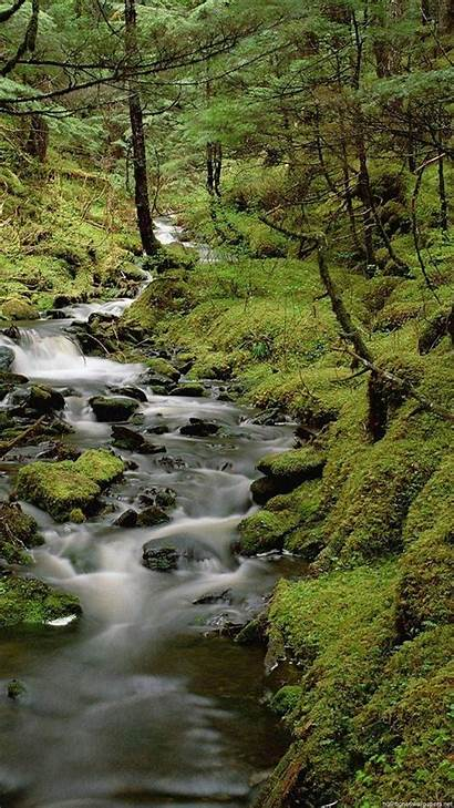 Nature Wallpapers Iphone Rain Forest Cool Amazing