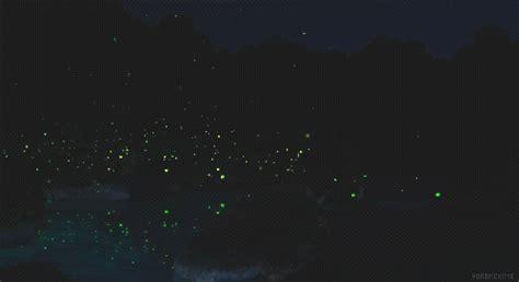 Fireflies Gif
