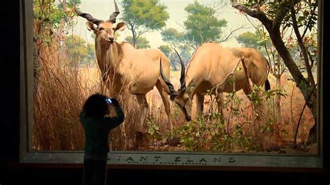 treasures   york american museum  natural history