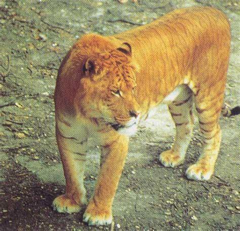 chambre de bonne marseille tigron ligron