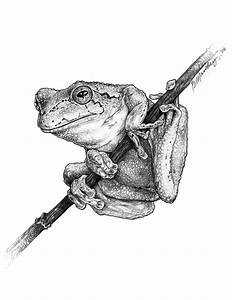 Tree Frog Drawing by Bob Manthey