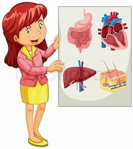 Woman Presenting Chart Of Organs