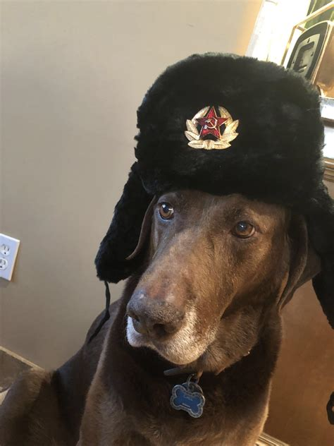 Soviet Doggo Sovietwomble