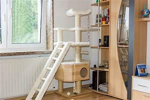 Kratzbaum Selber Machen : stabilen kratzbaum bauen tueftler und ~ Orissabook.com Haus und Dekorationen
