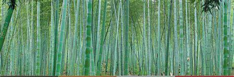 moso bamboo flooring melbourne the original bamboo flooring company bamboo floors australia