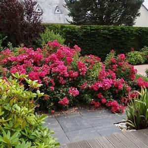 Rosier Tige Pas Cher : rosiers decorosiers achat vente de rosiers pas cher ~ Dallasstarsshop.com Idées de Décoration