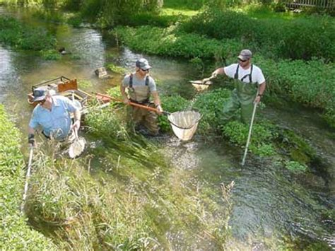 Pa Fish And Boat Commission Biologist Reports by 2003 Biologist Report Letort Run