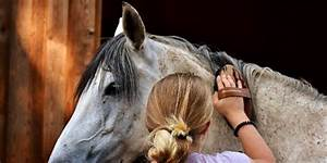 10 Best Horse Grooming Kits For Kids