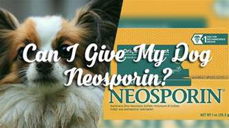 is neosporin safe for cats can i give my neosporin pet consider