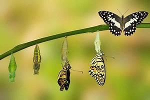 Bedeutung Schmetterling In Der Wohnung : von der raupe zum schmetterling systemische und familienaufstellungen berlin ~ Watch28wear.com Haus und Dekorationen